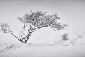 Cleeve Hill Snow 2