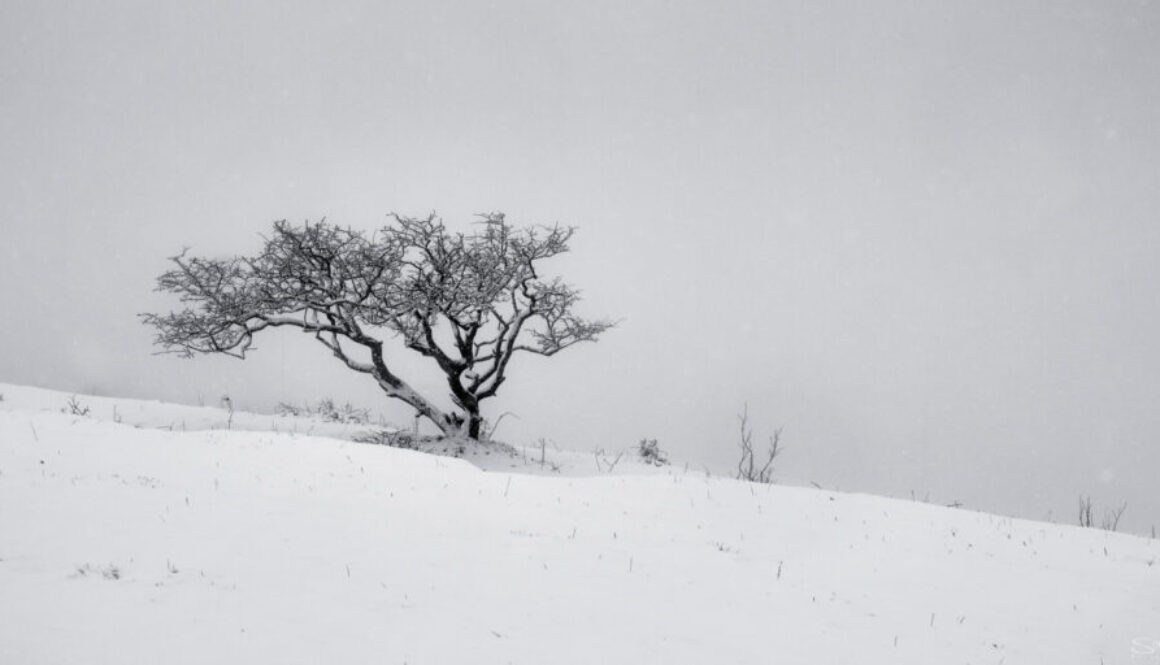 Cleeve Hill Snow 3