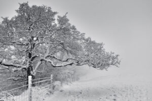 Cleeve Hill Snow 8